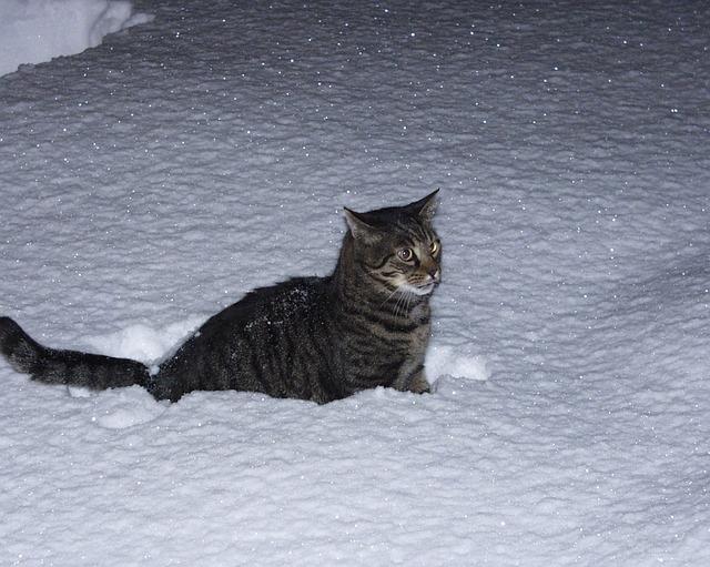 feb5e56fffff52 Chcesz pomóc bezdomnym kotom zimą? Poznaj 5 zasad odpowiedzialnego  postępowania