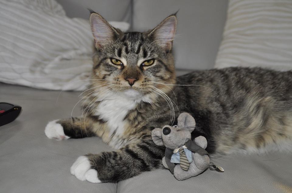 Kot Przyniósł Mysz Pod Drzwi Dlaczego Jak Zareagować